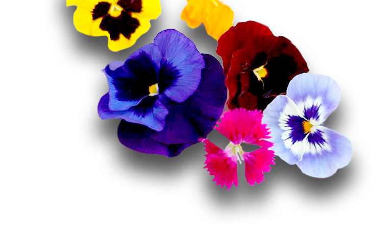 Flores - Restaurante Balandro